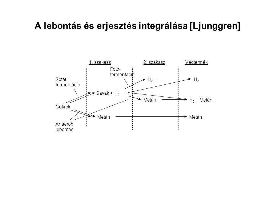 A lebontás és erjesztés integrálása [Ljunggren]
